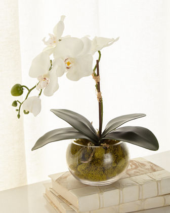 John-Richard Collection Petite Orchid Phalaenopsis