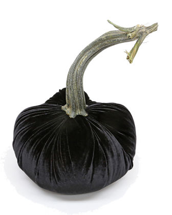 Limited Edition  Velvet Pumpkin with Natural Stem & Feathers